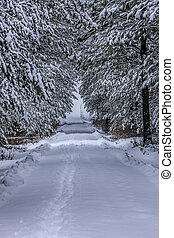 Trees cover a snowy lane.
