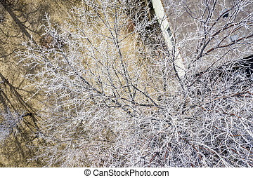 trees covered by frost aerial overhead view