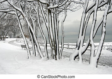 Trees covered by the snow