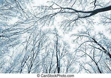 trees covered snow over winter sky - Trees and brunchs...