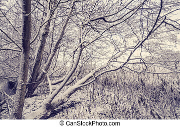 Trees covered with snow in the forest