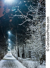 trees covered with snow in the winter night