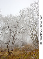 trees covered with snow and mist