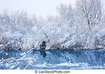 Trees covered with snow. Winter landscape.