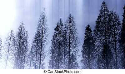 Trees crown sway in wind,metasequoia,Jungle,forest.