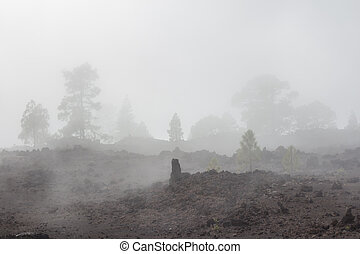 trees disappearing in foggy landscape