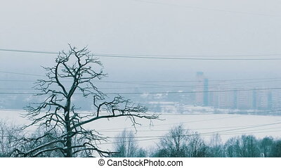 Trees During Heavy Snowfall and City Block of Flats Buildings At Background Defocused