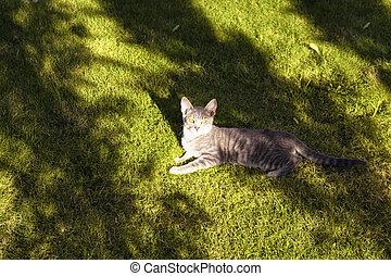 trees', estate, bodrum., molto, tabby, esso, gatto, campo, caldo, occhiate, macchina fotografica., sotto, ombre, erba, giorno, dire bugie