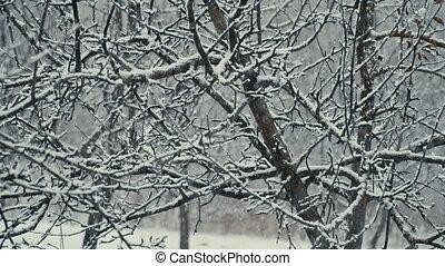 trees falling snow