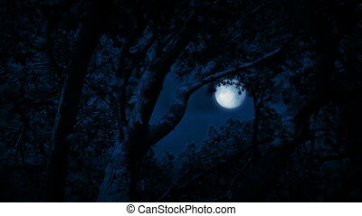 Trees Framing Full Moon Sky At Night - Trees framing sky in...