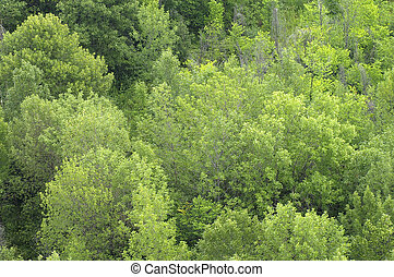 Green forest (treetops) from above