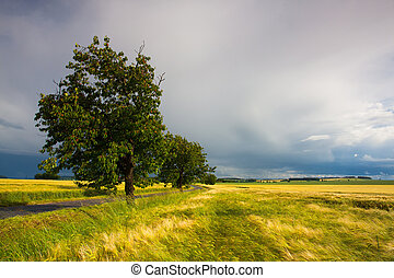 Trees full of cherries and summer landscape