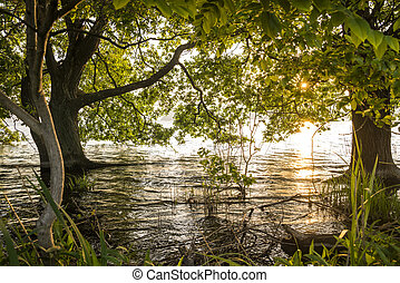 Trees growing from lake shallow - Lined japanese alder...