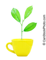 Trees growing in a cup isolated