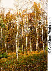Trees growing in the wood in autumn time of year
