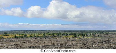 trees growing on an old lava flow in Volcanoes National Park, Big Island of Hawaii. Panoramic view