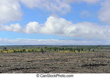 trees growing on an old lava flow in Volcanoes National Park, Big Island of Hawaii