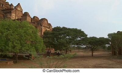 An establishing shot of trees growing on a field in between old temples in Myanmar