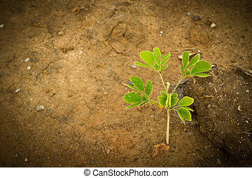 Trees growing out of the soil