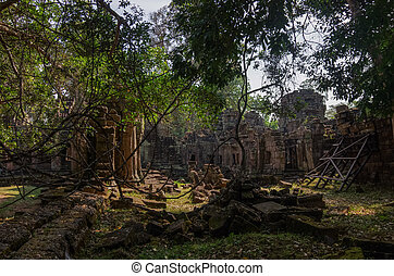 Trees growing through the ruins of Ta Prohm Temple at Angkor Wat in Cambodia