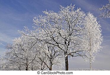 Trees, hoarfrost in winter, Germany