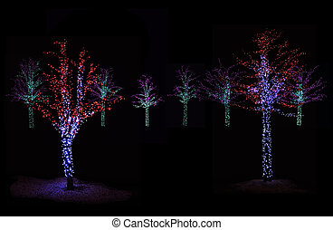 Trees Illuminated at night