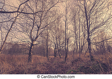 Trees in a autumn scenery
