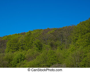 Trees in a forest on a hill