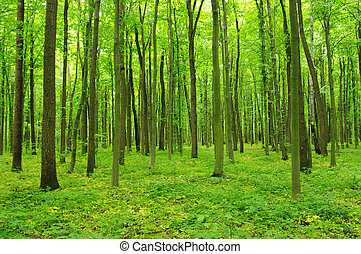 forest in spring