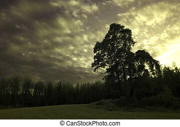 Trees in a meadow below a moody sky - A summer landscape...