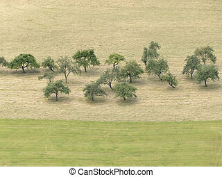 trees in a meadow with hay