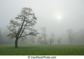 Trees in a misty morning meadow