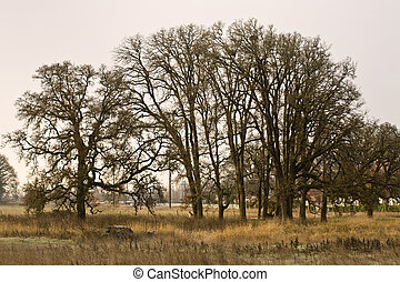 Trees and pasture in early morning light.