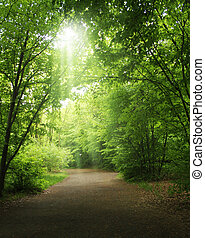 trees in a summer forest under bright sun