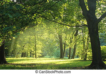 trees in a summer forest - trees in a summer forest under...
