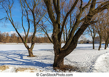 trees in a winter