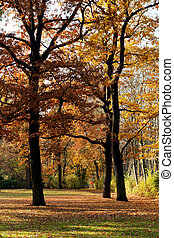 Trees in an Autumn Park