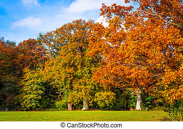 Trees in autumn colors in a park