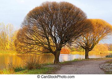 Trees in autumn.
