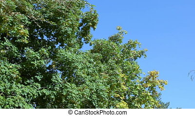 Trees in autumn on a background of blue sky.