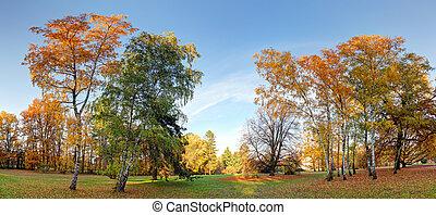 Trees in Autumn park.