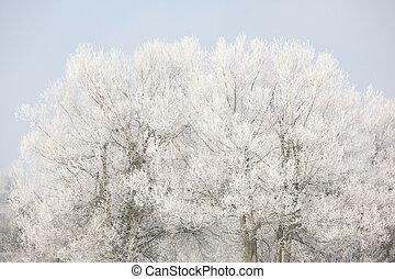 Trees in beatufiul hoarfrost