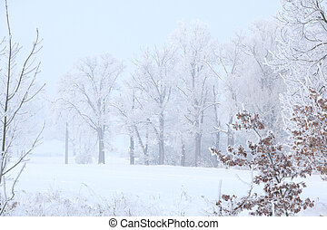 Trees in beautiful hoarfrost and with fog
