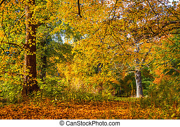 Trees in beautiful warm colors