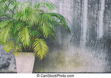 Trees in cement pots with cement background