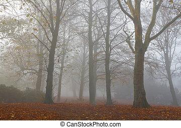 Trees in dense fog on cold November day