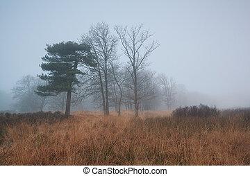 trees in dense fog - trees during late autumn in dense fog