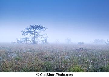 trees in dense morning fog