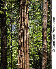 trees in detail in the romantic valley of yosemite national park