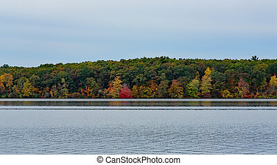 Trees in fall color at a lake's edge